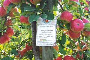 Herzapfelhof Luehs BioApfelbaumPatenschaftHerzapfelhof - Ein Herz für Äpfel